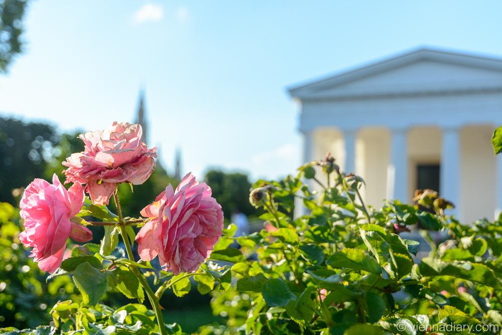 Vienna Photo Locations: Volksgarten