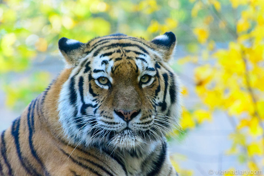 Places to visit in Vienna: Zoo Vienna